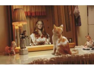 Чем кормить кастрированных котов и стерилизованных кошек?